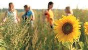 Jugendliche im Korn- und Sonnenblumenfeld