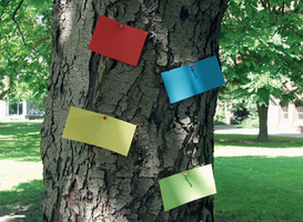 Bunte Zettel am Baum
